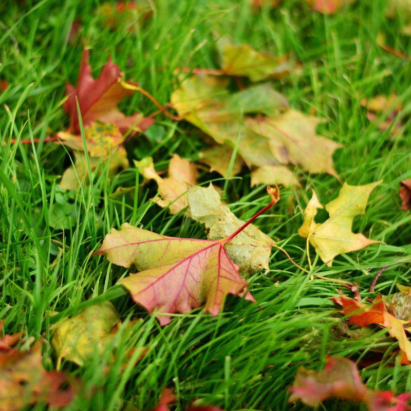 nega trave jeseni