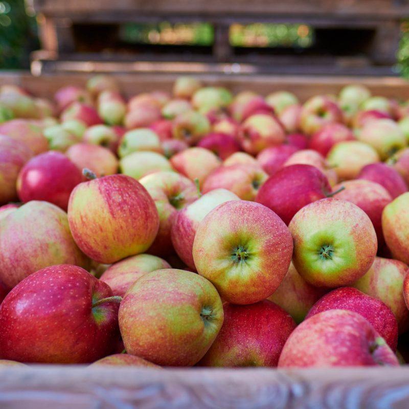 Shranjevanje jabolk